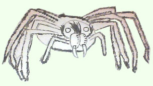 Goliath Spider drawn by Annabel aged 12