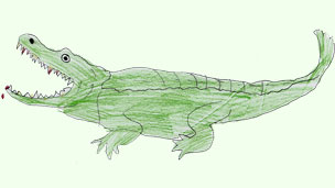 a drawing of a crocodile