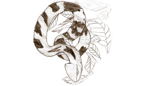 a drawing of a snake