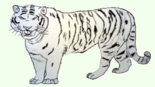 Tiger drawing.