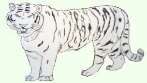 a drawing of a tiger
