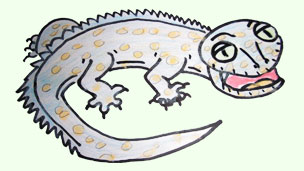 Gecko drawing