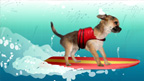A surfing dog from Barkmania