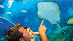 A man and a little girl pointing at a stingray in an ocean tank.
