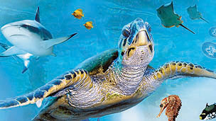 A large turtle swimming, with other marine life behind.