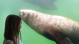 A girl looking at a seal in an ocean tank.