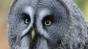 Close-up of an owl's face
