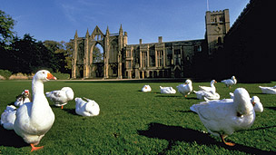 A flock of geese relaxing in the sun in front of the abbey.