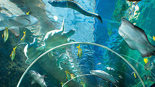 A selection of sea creatures swimming over an underwater tunnel, including a turtle and eels.