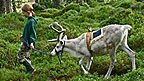 A young girl leading a reindeer through a forested area.