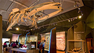 The interior of the Manx museum with various exhibitions and displays. A whale skeletion is hanging from the ceiling.