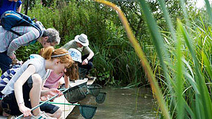 A group of people with fishing nets pond dipping.