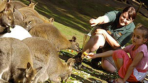 A young girl and a park keeper feeding a group of wallabies.
