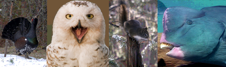 A collage of funny animals from Walk on the Wild Side.