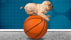 Dog on a basketball