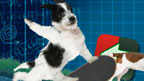 A virtual dog performs a trick on a skateboard