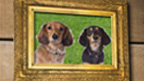 A picture of some dogs in a frame