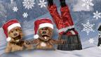 Hacker and Dodge in Santa hats, Santa disappearing down the chimney.