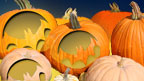 Various carved pumpkins.