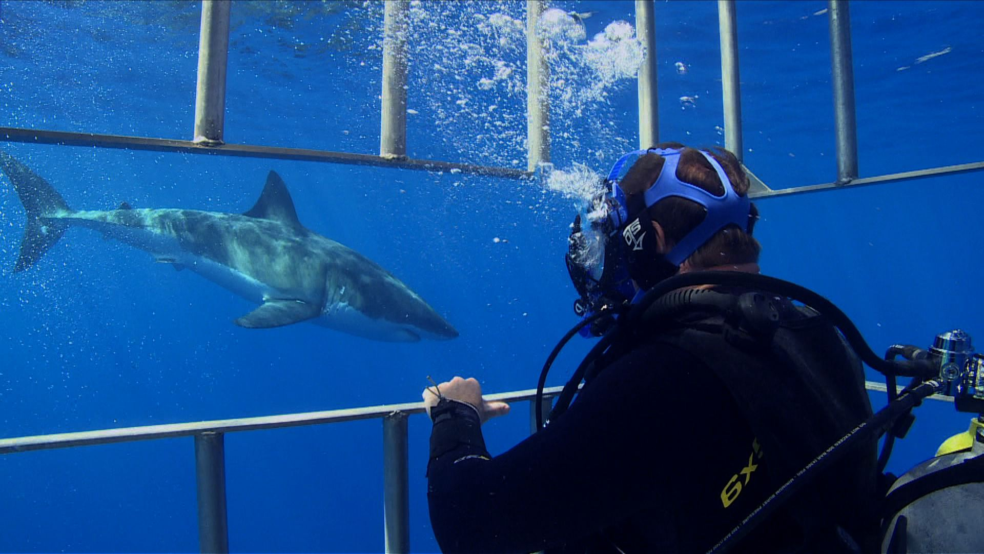 Steve in an underwater cage looking at a great white shark