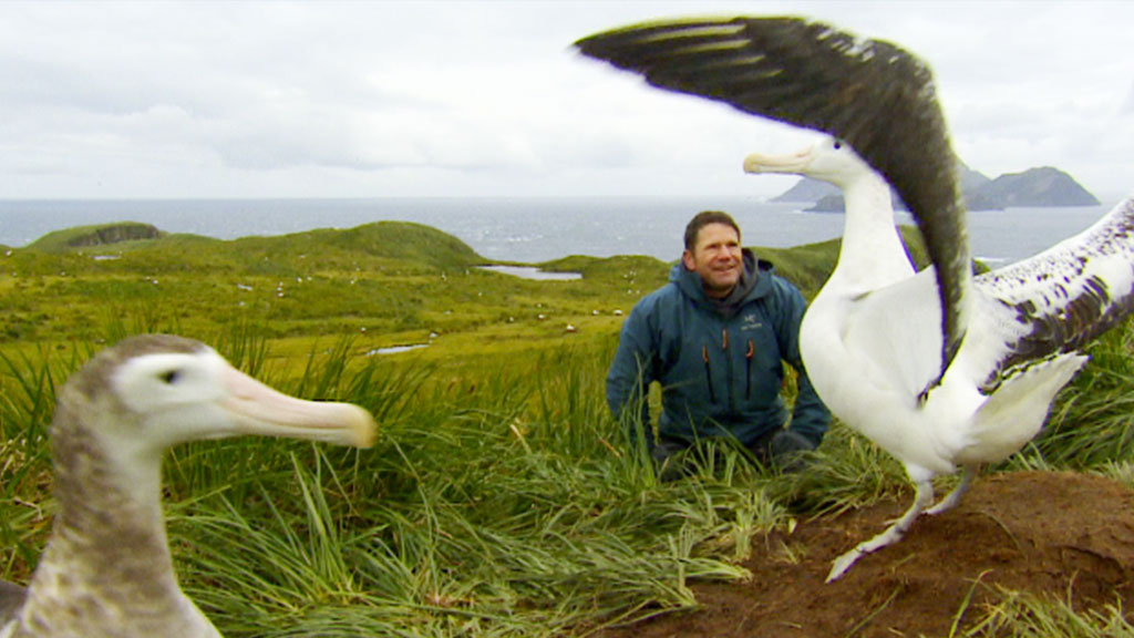 Steve sitting near two albatross.