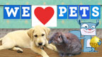 Various CBBC pets and cute animals on a blue background.