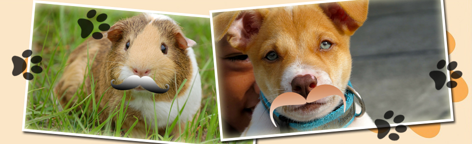 Pictures of a guinea pig and puppy with fake taches.