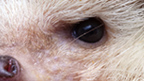 A close-up view of an animal's eye.