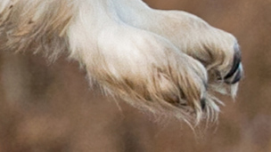 A close-up view of an animal's feet.