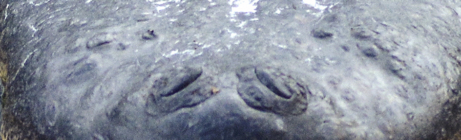 A close-up of an animal's nose.