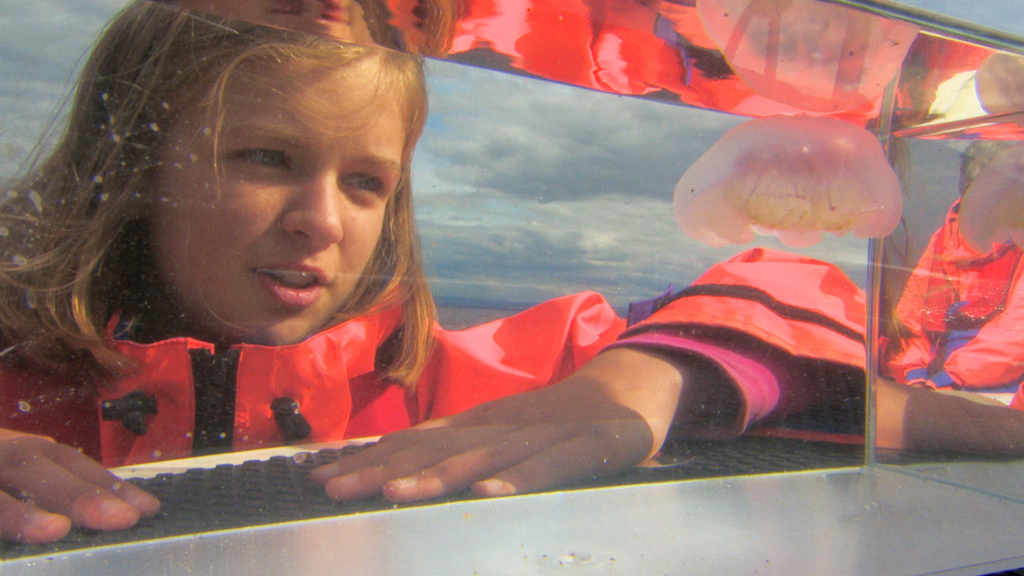 Emily examines a jellyfish in a tank.