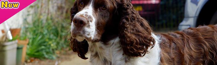 Discover CBBC - Meet the Pups - Lola and Morgan