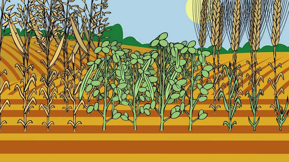 BBC School Radio: Nursery songs - Oats and beans and barley grow