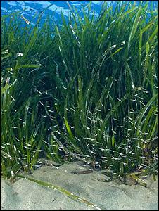 Algas (arquivo)