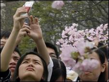 Lễ hội hoa anh đào năm 2008 ở Hà Nội