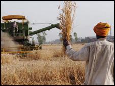 گندم کا کھیت