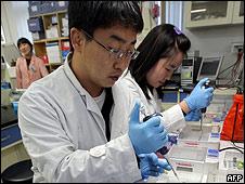 Cintíficos coreanos estudian muestras de carne porcina