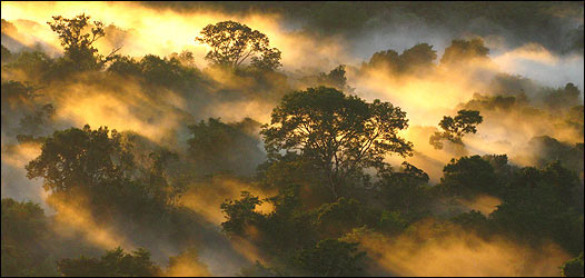 Amanecer en Sao Gabriel da Cachoeira, Brasil (Foto: Peter van der Sleen)