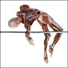 Body Worlds (Foto: Gunther von Hagens, Institut für Plastination, Heidelberg, www.koerperwelten.de)