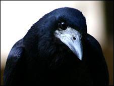 Pájaro (foto gentileza Christopher Bird)