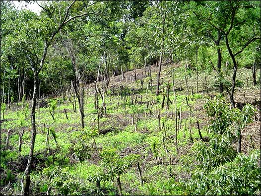 Image result for Bosque fragmentado y árboles dispersos de costa sur Guatemala