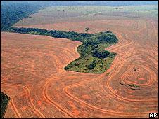 La deforestación en Brazil.