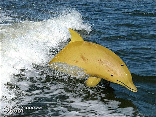 Golfinho banana