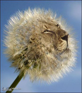 Dente de leão