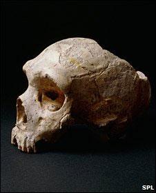 El Neandertal tampoco sentía amargura - BBC Ciencia