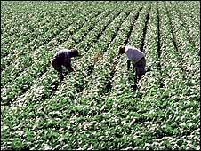 Terreno cultivado con soya en Argentina