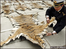 Funcionarios de aduanas inspeccionan una piel de tigre en Lhasa, Tíbet, en 2005