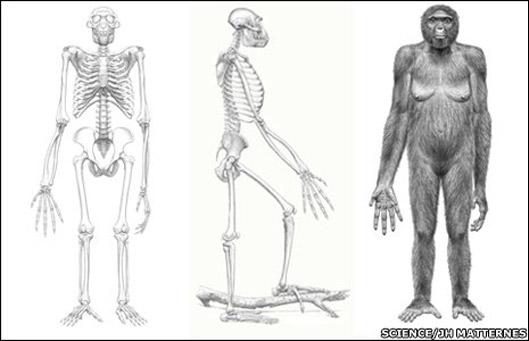 Ardipithecus ramidus, image: SCIENCE/JH Matternes