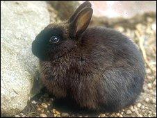 Prefeitura de Estocolmo mata coelhos, que viram biocombustível