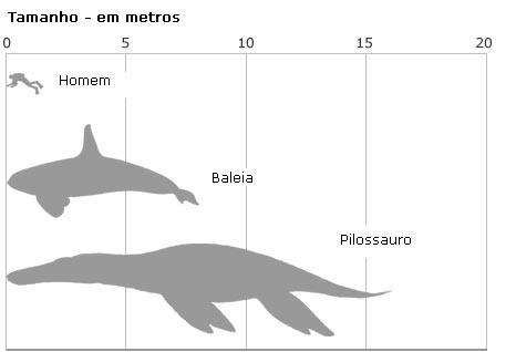 Gráfico comparando tamanhos dos animais